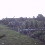 Millbridge Allotments